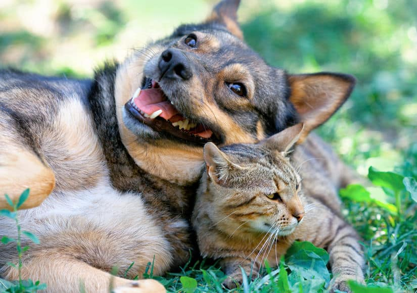 Is Cat Grass Safe For Dogs