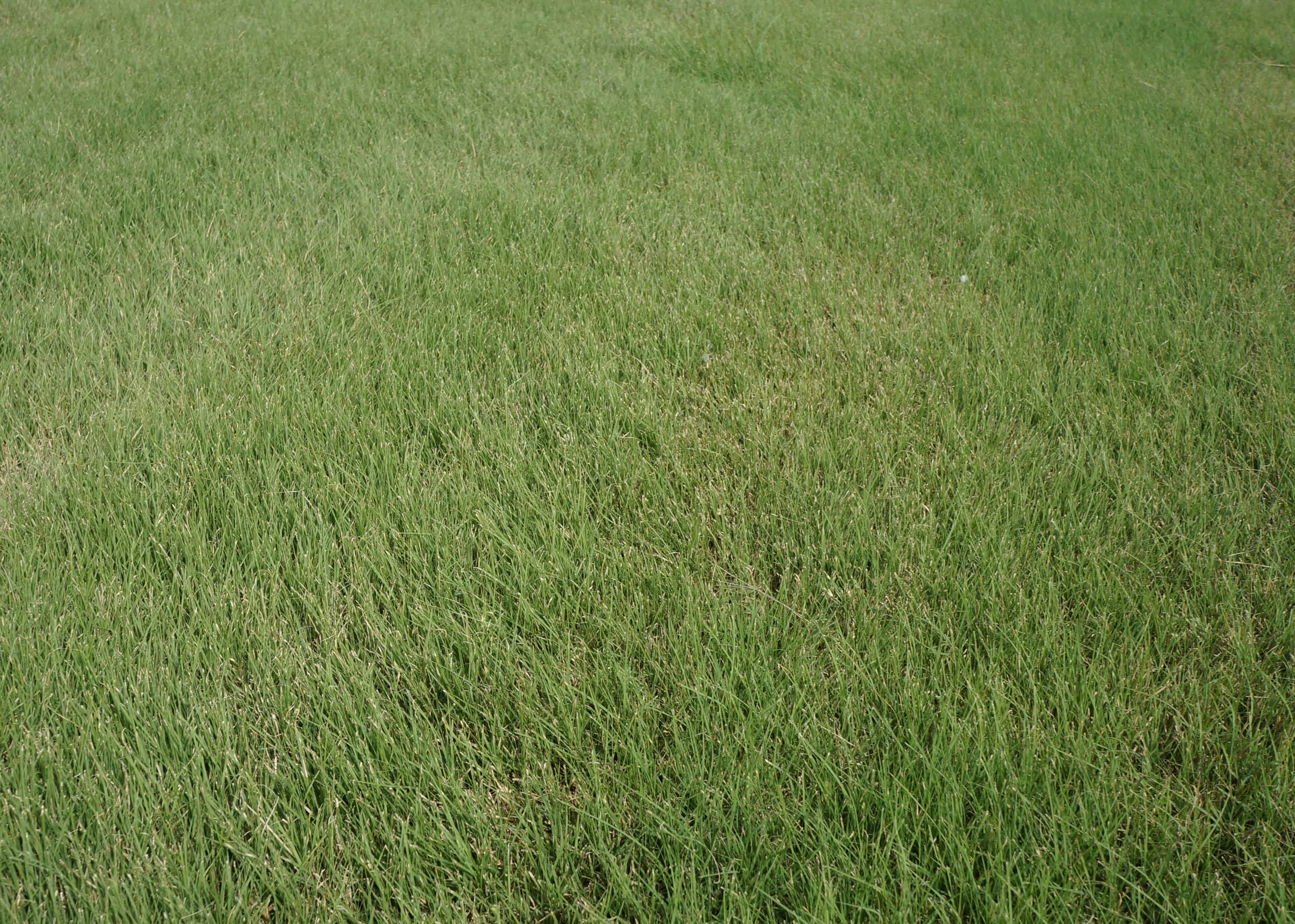 Density Buffalo The Grass Outlet