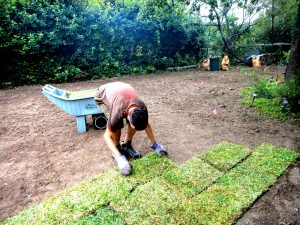 How To Lay Sod The Gr Outlet Austin Tx