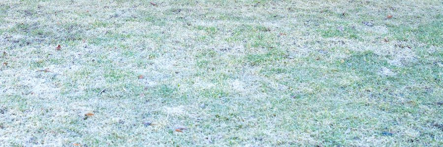 Winter Lawn Care Tips The Grass Outlet Texas
