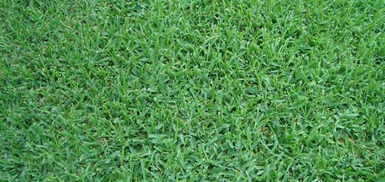 San Antonio Grass Delivered To Your Home The Grass Outlet
