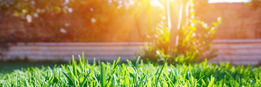 grass in backyard enduring the hot sun in summer