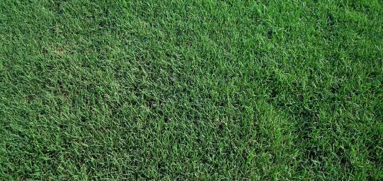 Dallas Sod Grass — Dallas, Texas | The Grass Outlet