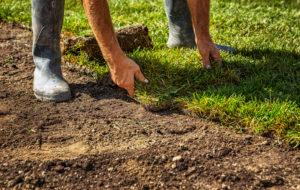unrolling grass turf rolls