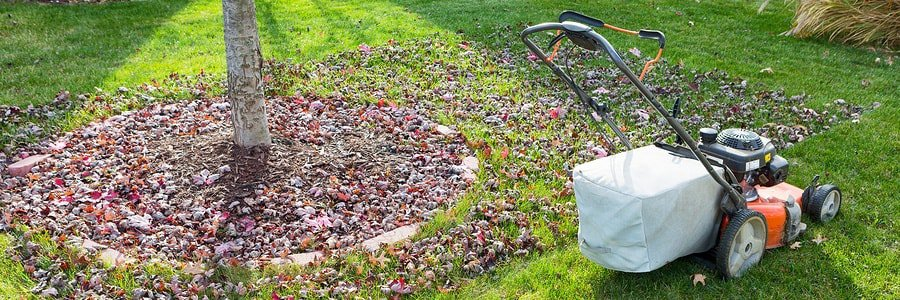Gr In Yard During Fall