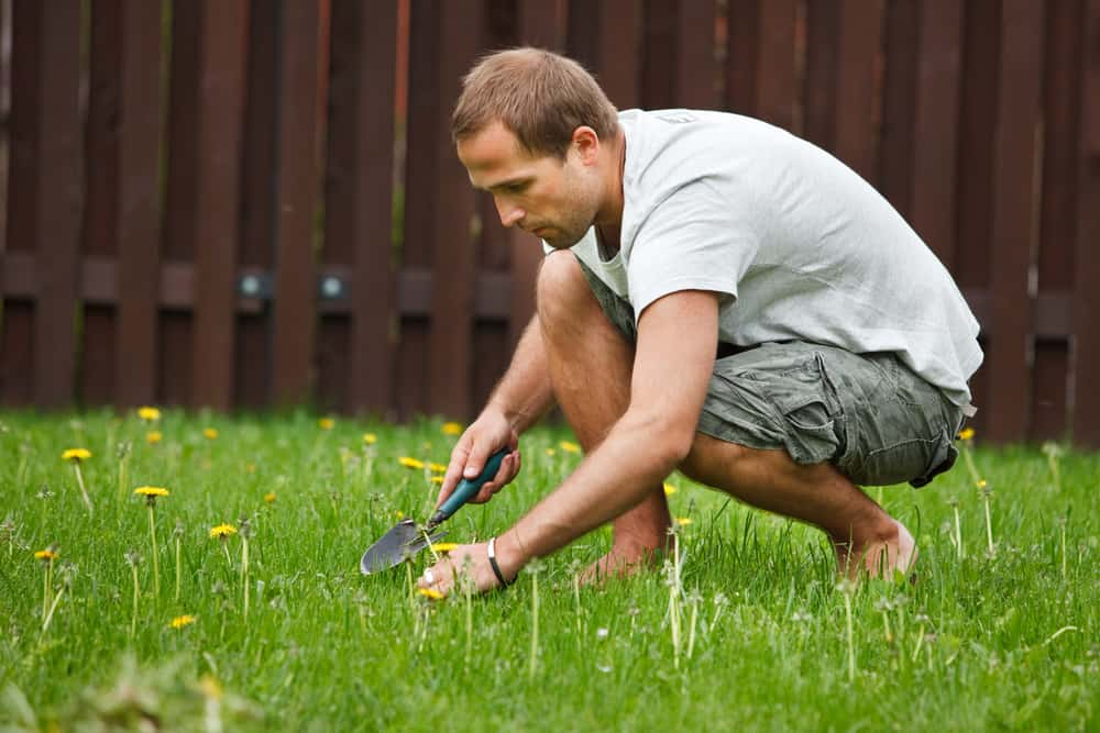The Best Way To Get Rid Of Weeds The Grass Outlet Texas