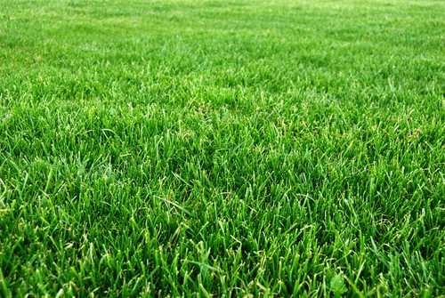 Should You Scalp Your Lawn The Grass Outlet Texas