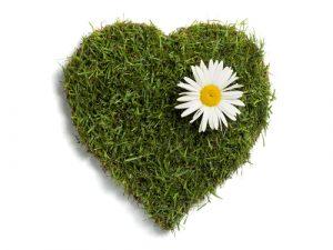 grass heart with a sunflower
