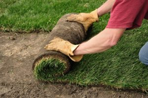 caucasian person unrolling sod