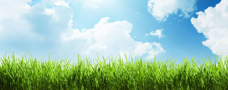 green grass and high temps - the grass outlet