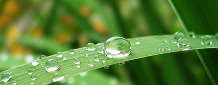 grass blade with water droplets